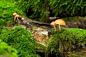 Yellow mushroom in the forest