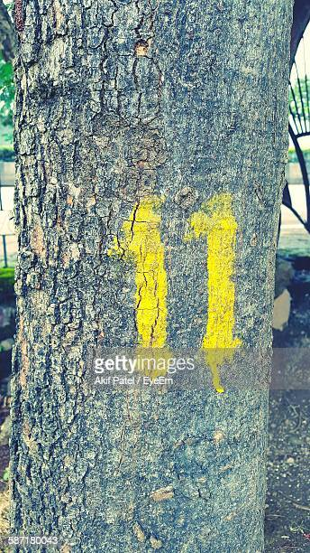 Yellow Number 11 Paint On Tree Trunk