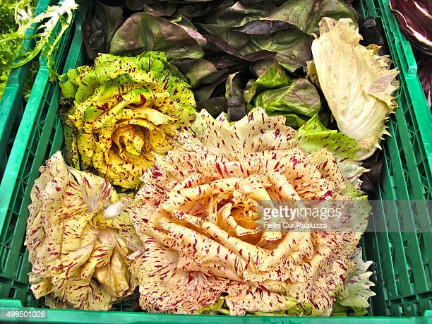 Yellow Radicchio at vegetable market at Bern Switzerland