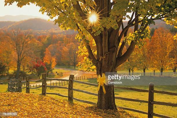 Yellow ribbon around tree trunk in autumn