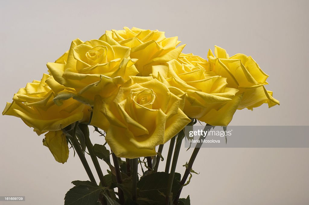 Yellow Rose Flower Bouquet : Stock Photo
