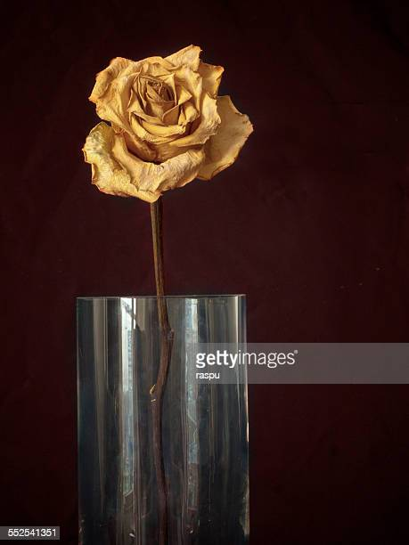 A yellow rose on a drinking glass, still life