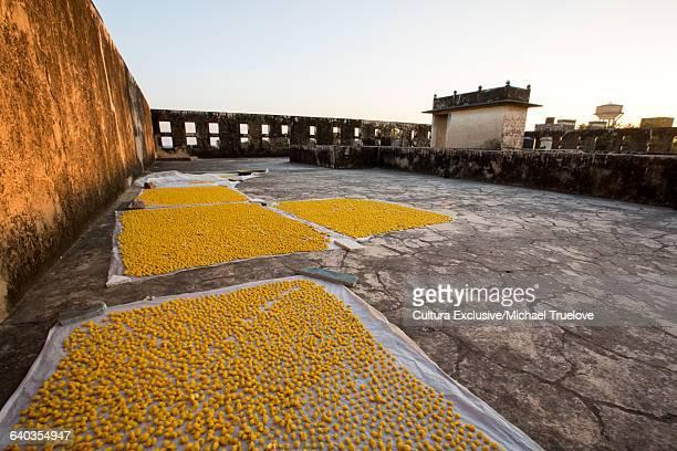 Yellow snacks drying on muslin, Deshnoke, Bikaner, Rajasthan, India
