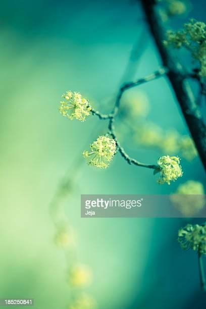 Gelbe Frühling