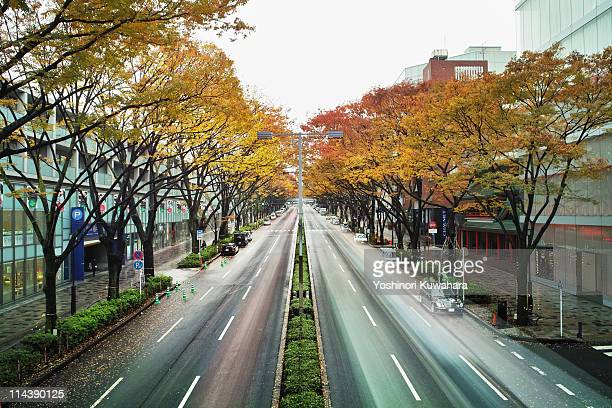 Yellow tree road, omotesando