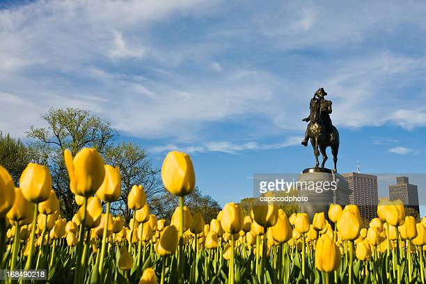 Yellow Tulips and George Washington