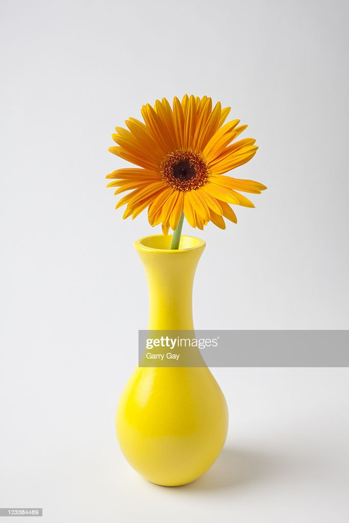 Yellow vase with orange daisy : Stock Photo