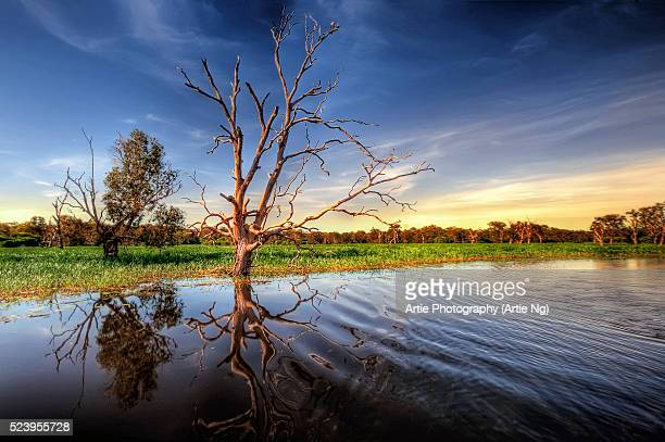 Yellow Water Billabong, Wetlands of Kakadu, North Territory, Australia