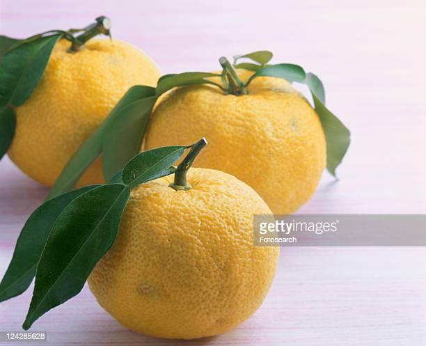 Yellow Yuzu Citron