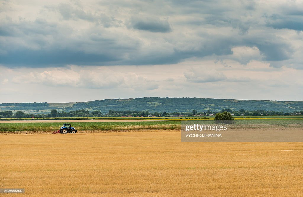 Yellow-green field beautyful : Stock Photo