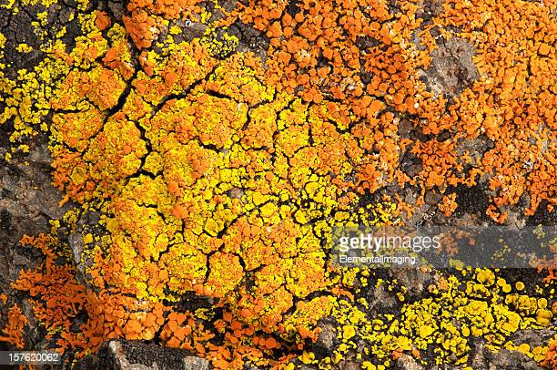 Yellowstone Moss Rock Background Pattern or Texture
