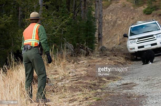 Yellowstone-Ranger