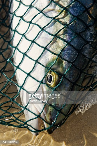 Fish hoek stock photos and pictures getty images for Drag net fishing
