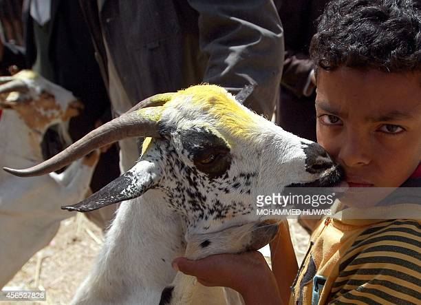 A Yemeni boy lifts up a goat at a livestock market in the capital Sanaa on October 2 two days ahead the major Muslim festival of Eid alAdha During...