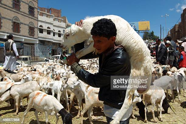 A Yemeni man carries a sheep at a livestock market in the capital Sanaa on October 2 two days ahead the major Muslim festival of Eid alAdha During...
