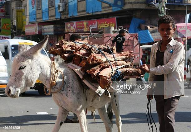 Yemeni steers a donkey carrying firewoods in Taiz Yemen on October 4 2015 Yemen is experiencing a shortage of gas supplies due to the clashes in the...