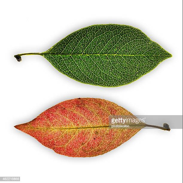 Yin & Yang - circle of life - young & old leaves
