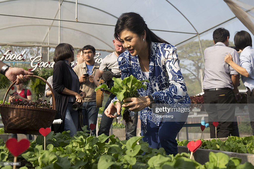 <a gi-track='captionPersonalityLinkClicked' href=/galleries/search?phrase=Yingluck+Shinawatra&family=editorial&specificpeople=787330 ng-click='$event.stopPropagation()'>Yingluck Shinawatra</a>, Thailand's former prime minister, picks vegetables in her garden outside her home in Bangkok, Thailand, on Friday, Feb. 12, 2016. Yingluck, whose government was ousted in a military coup, is engaged in a criminal trial on charges she was negligent in overseeing a rice purchasing program. She has denied the allegations, saying the case is politically motivated and being pushed by the forces behind the May 2014 military coup that toppled her elected government. Photographer: Brent Lewin/Bloomberg via Getty Images