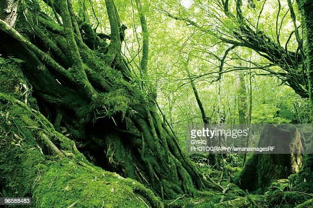 Yodogawa trail, Kagoshima Prefecture, Kyushu, Japan