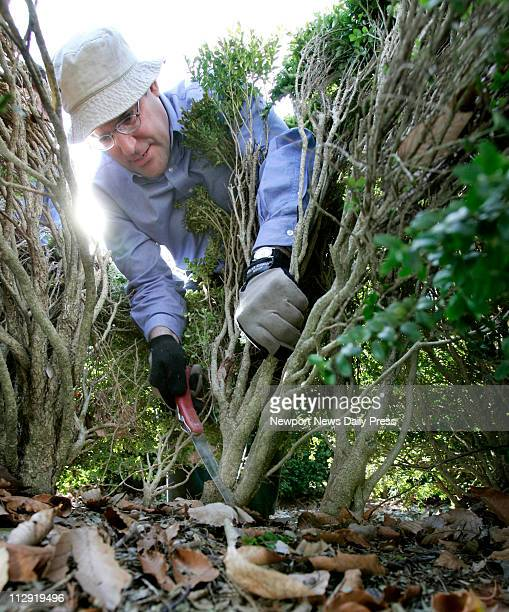 York County's extension agent Jim Orband uses a handsaw to prune a boxwood in Yorktown Virginia Thursday February 16 2006