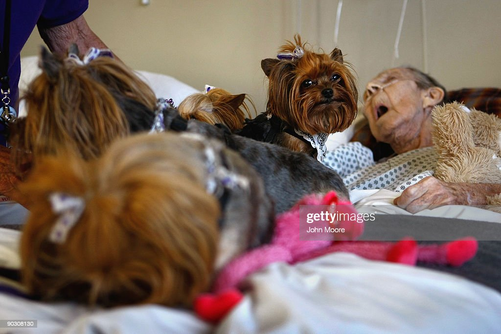 Yorkshire terriers sit with Annabelle Martin, 92, for a final session of pet therapy during her last hours of life at the Hospice of Saint John on September 2, 2009 in Lakewood, Colorado. Martin had spent almost two and a half years living at the non-profit hospice, which strives to maintain quality of life, manage pain, and offer spirutal guidance for residents in their last stage of life. Government funding for counseling for end of life care has become a contentious issue in the current national debate on health care reform.