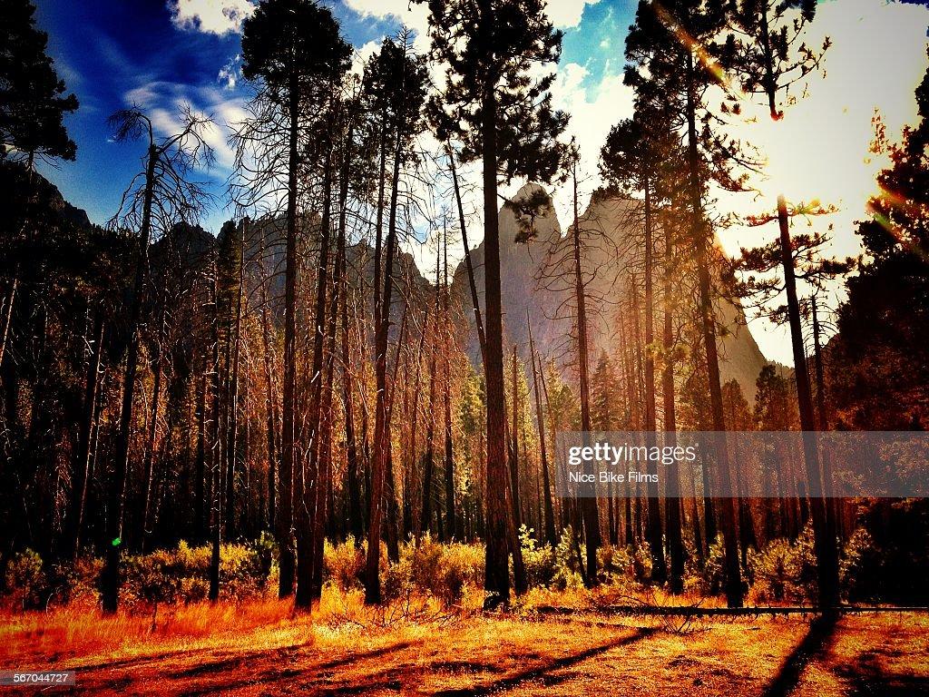 Yosemite Valley backlit.