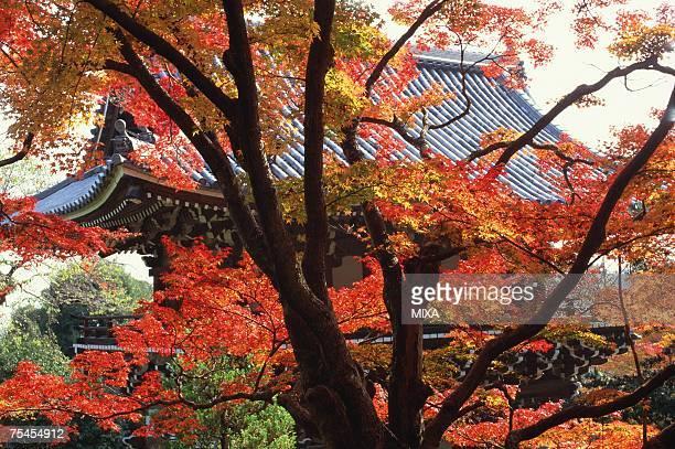 Yoshimine-dera Temple, Kyoto Prefecture, Japan