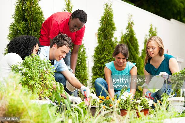 Young adult friends gardening together
