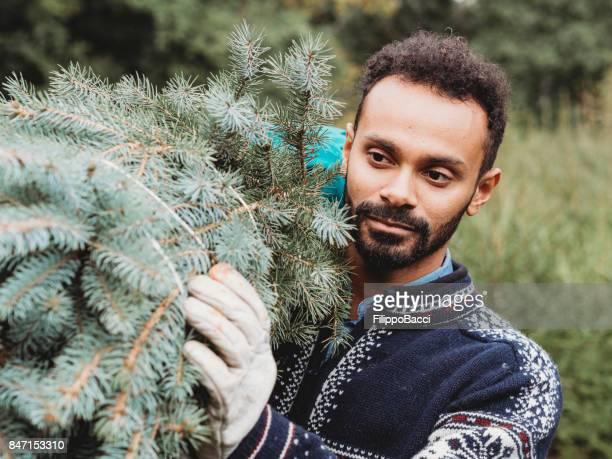 Young adult man choosing a Christmas tree
