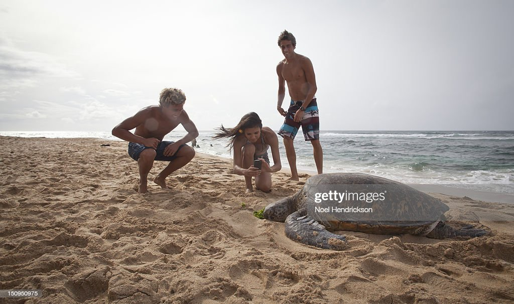 Young adults photograph a sea turtle : Stock Photo