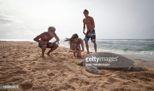 Young adults photograph a sea turtle : Photo
