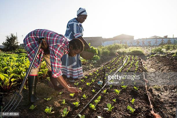 Young African Male and Adult African Woman working in garden