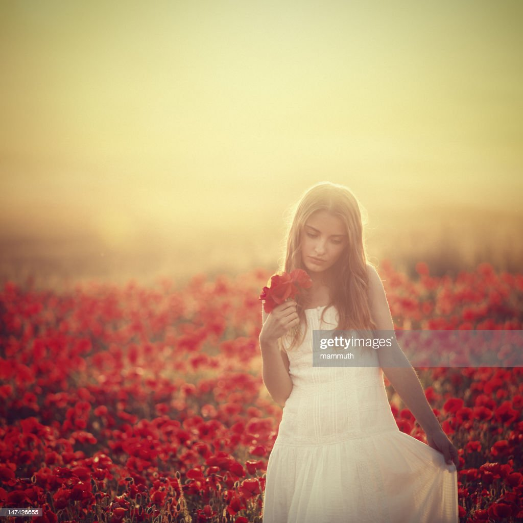 young beauty in poppy field at sunset : Stock Photo