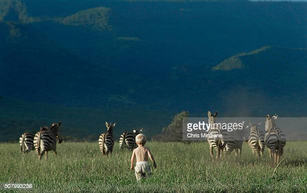Young blond boy in the grass walks over to a herd of zebra while on safari.