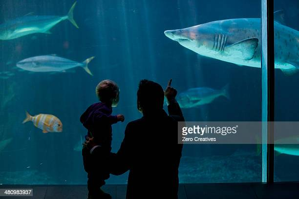 Young boy and father watching fish in aquarium