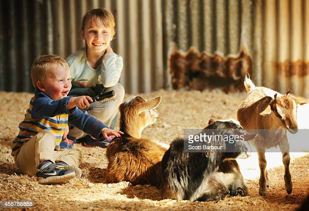 A young boy and girl interact with farm animals in the animal nursery at the 159th annual Royal Melbourne Show at the Royal Melbourne Showgrounds on...