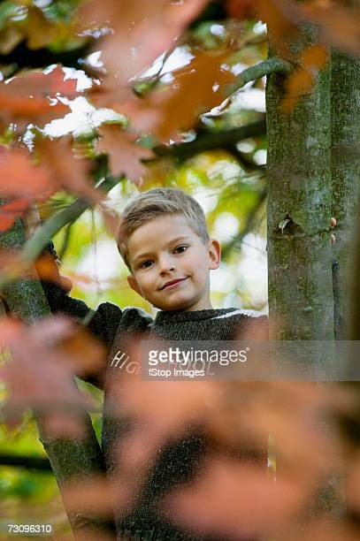 Young boy between tree branches