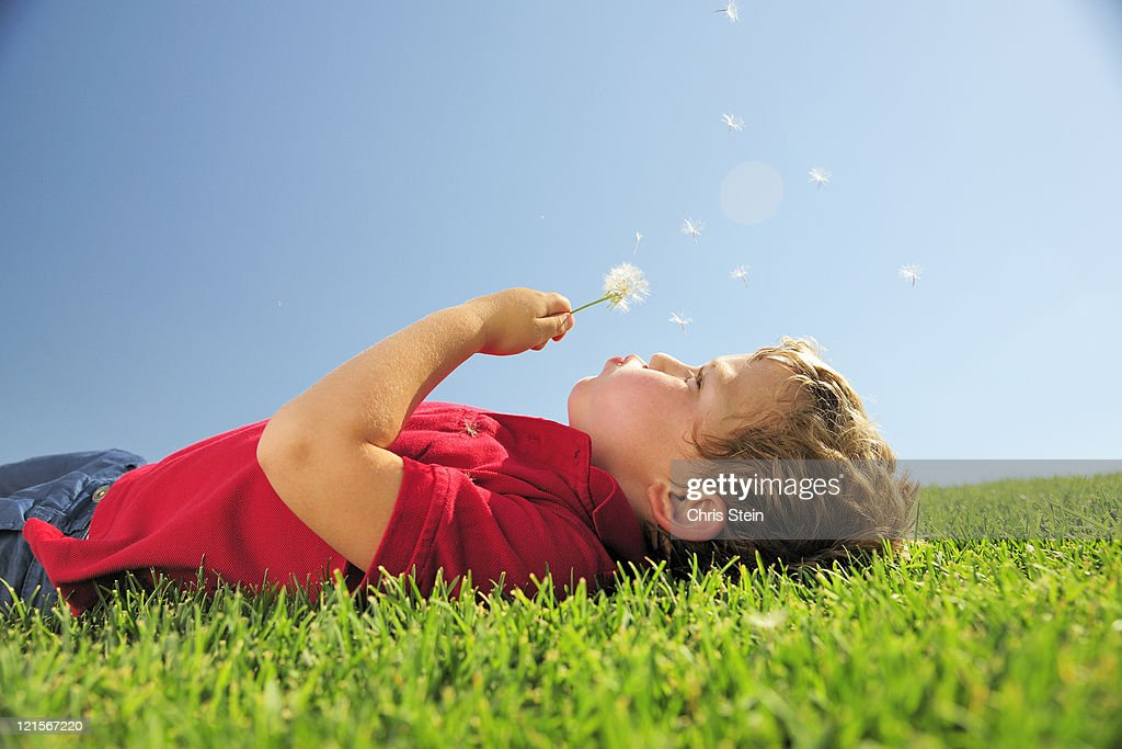 Young boy blowing on a dandelion in the grass : Stock Photo