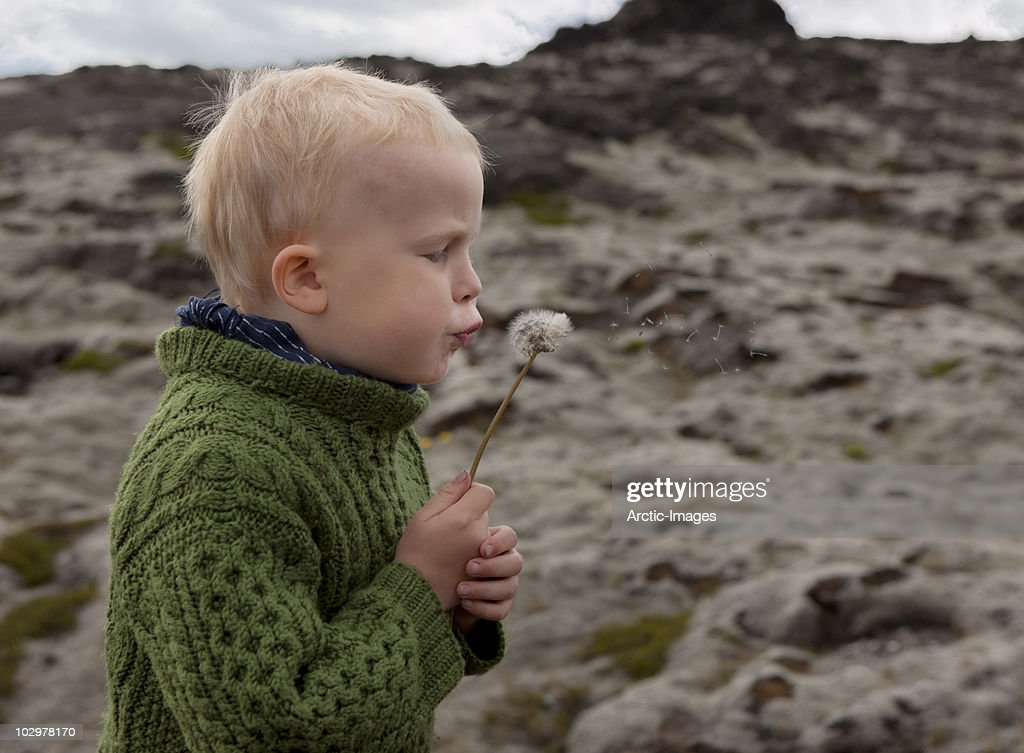 Young boy blowing on a dandelion  : Stock Photo