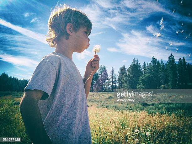 Young boy blows a dandelion into the summer breeze