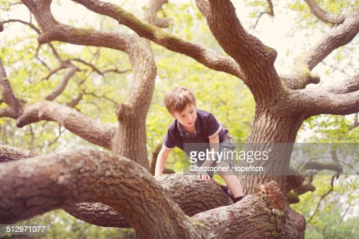 Young boy climbing an Oak tree
