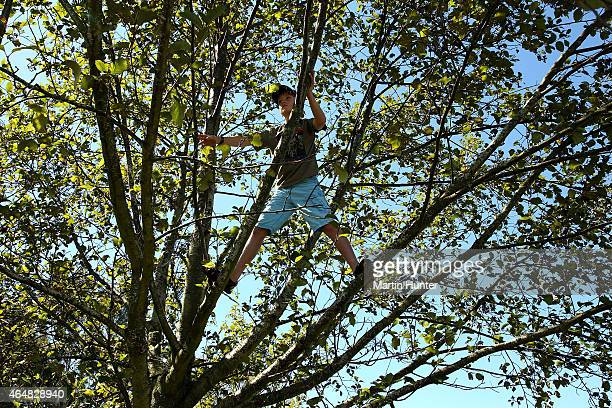 A young boy climbs a tree to get a good view of during day three of the ISPS Handa New Zealand Women's Open at Clearwater Golf Course on March 1 2015...