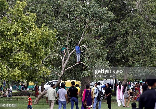 A young boy climbs on a tree to pick blackberries during a cloudy weather and sudden rain on July 6 2014 in New Delhi India Delhi experienced a warm...