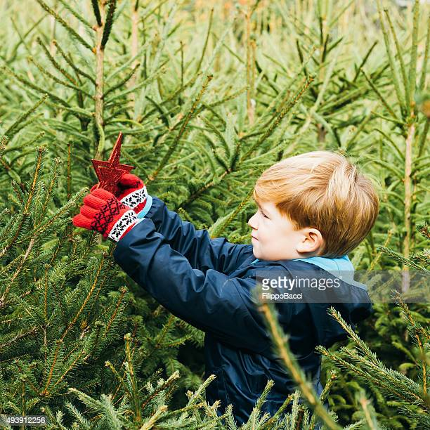 Young Boy Decorating A Christmas Tree Outdoor