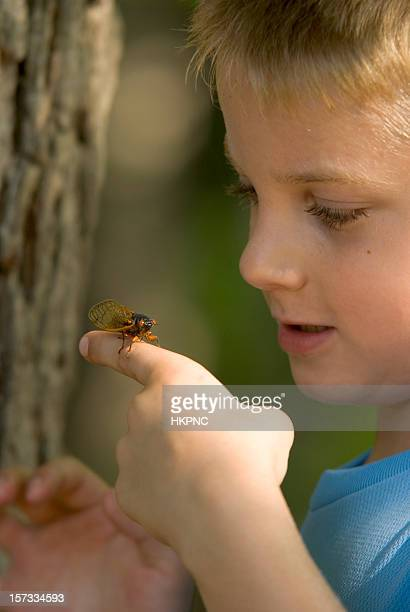 Jeune garçon examiner une Punaise de Cicada