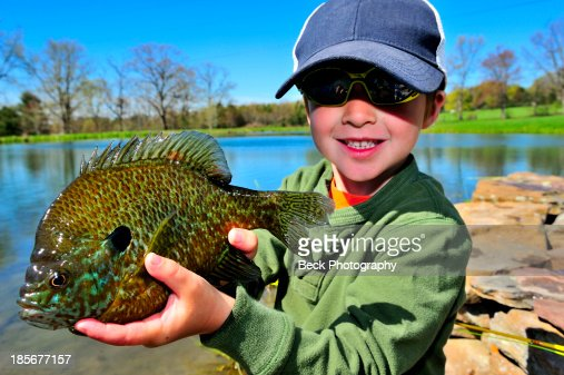 Young boy fishing in a pennsylvania pond stock photo for Pa fishing license fees