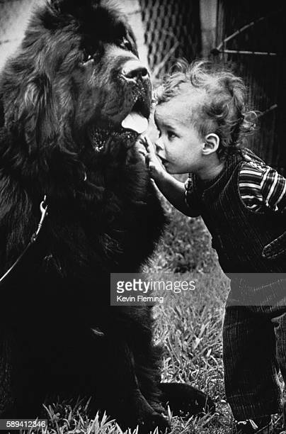 A young boy gets a closeup look at a large Newfoundland dog at the Mispillion Kennel Club dog show Harrington Delaware