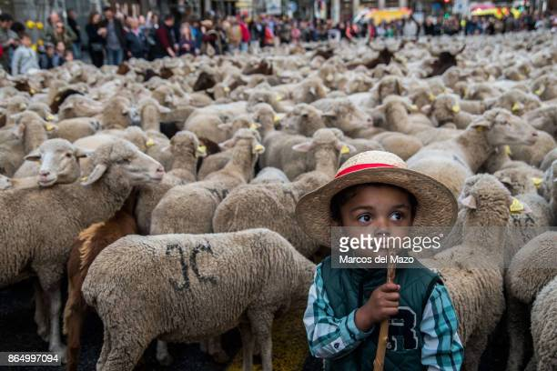 A young boy guides sheep through the streets during the annual transhumance festival