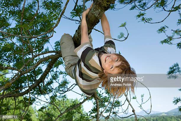 young boy hanging on tree
