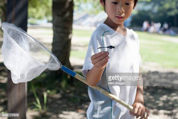 Young boy holding a butterfly net.